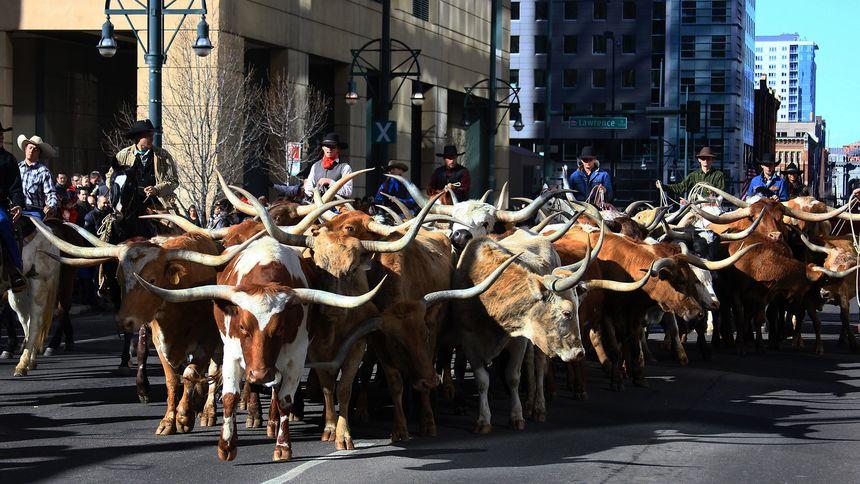 Denver National Stock Show