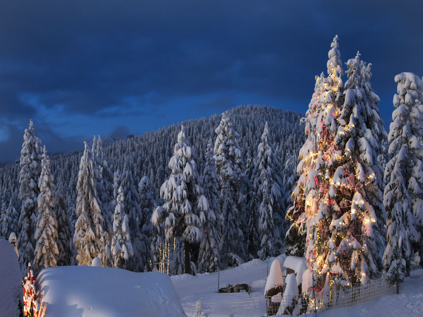 vancouver grouse mountain christmas reindeer