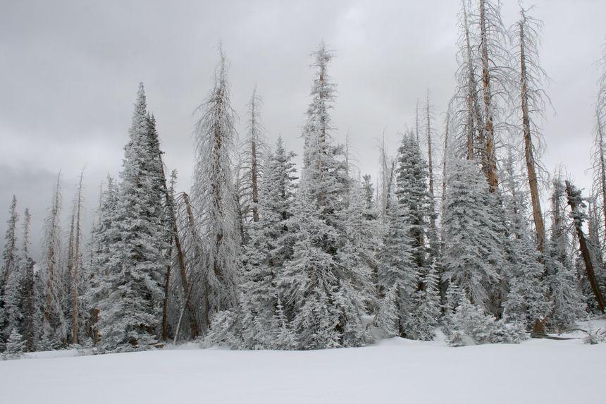 The 5 Best Ski Resorts Near Las Vegas - UPDATED 2020/21